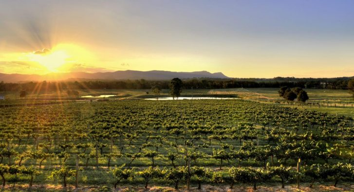 How to make the most of a One Day Trip to Hunter Valley